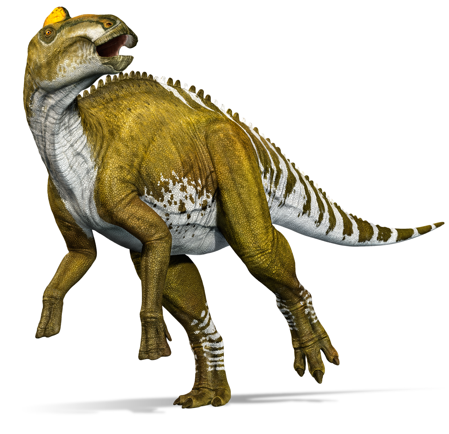 Edmontosaurus | Dinopedia | Fandom powered by Wikia