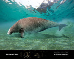 Steller's Sea Cow | Dinopedia | FANDOM powered by Wikia - photo#5