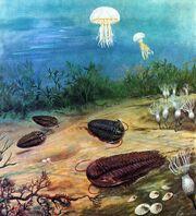 Cambrian Period Trilobites