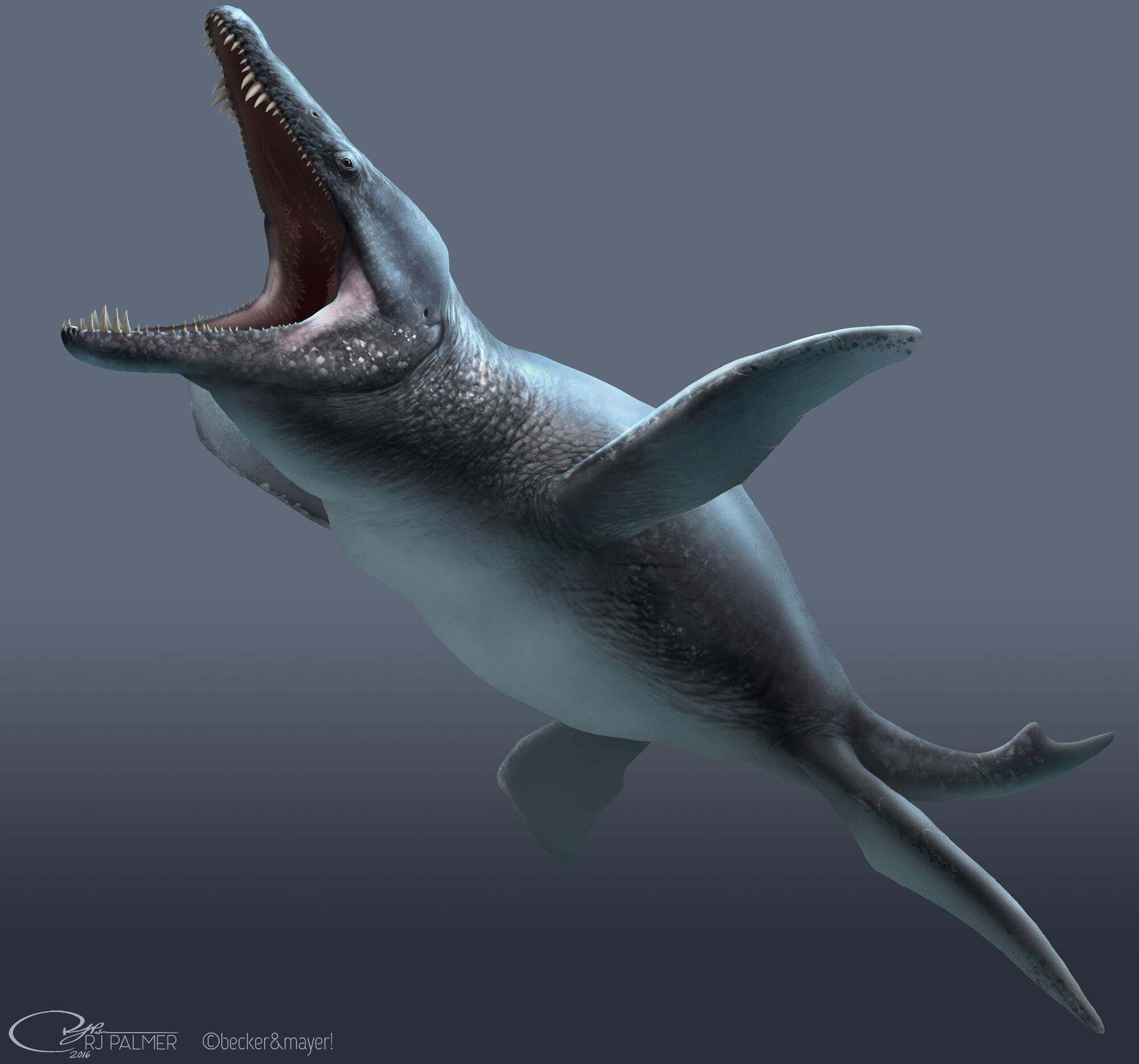 Liopleurodon   Dinopedia   Fandom powered by Wikia  Liopleurodon   ...