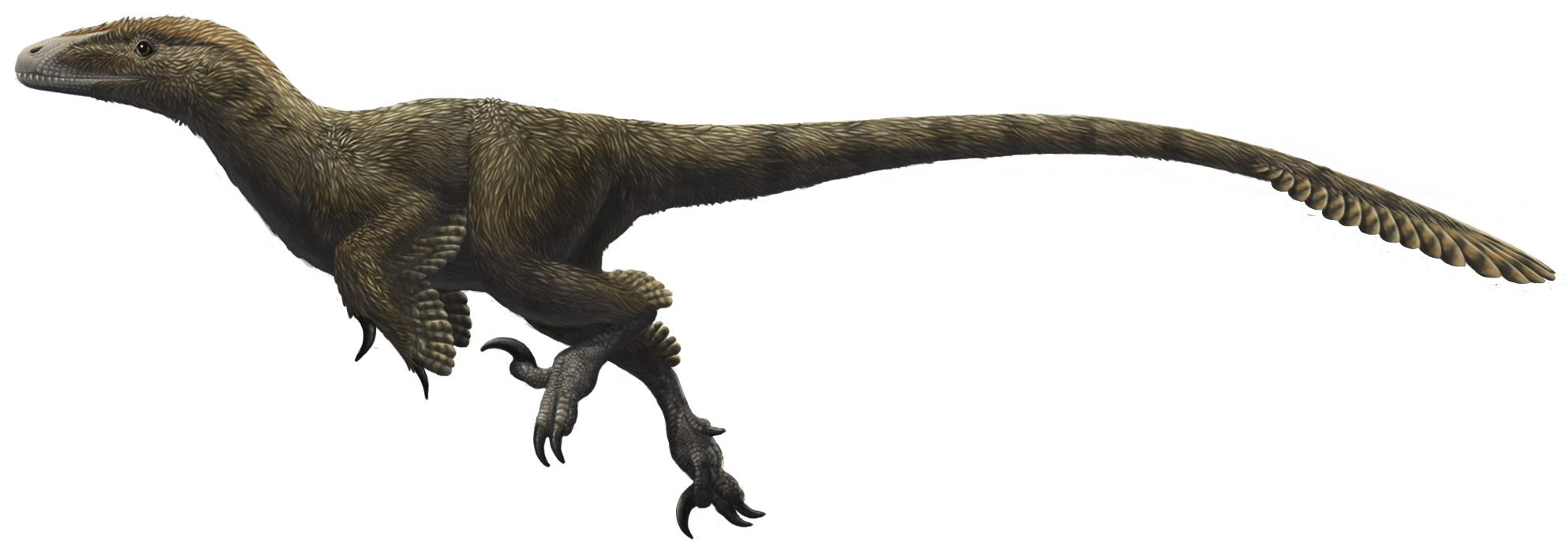 Utahraptor [Tuti1230 vs. 3lite vs. Coldfusion] Latest?cb=20140223223439