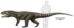 Postosuchus kirkpatricki size.jpg