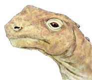 Abrosaurus head