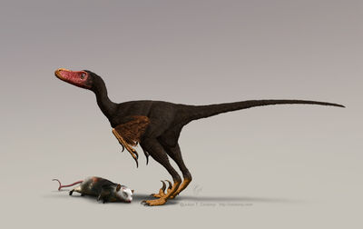 Bambiraptor w turkey vulture colours for web-based news releases only Julius Csotonyi