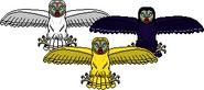 Weird Sisters Owls draw6bd