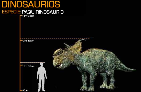 File:Pachyrhinosaurus.jpg