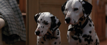 Pongo-and-Perdita-1996-1