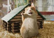Bucky the Hamster