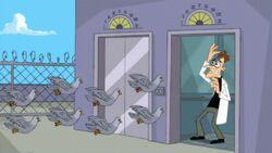 Pigeons Doof