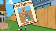 Lost Platypus