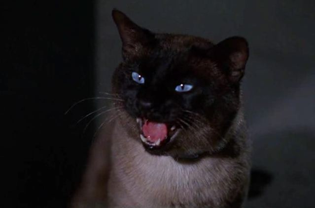 File:Darn Cat 001.jpg
