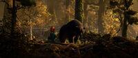 Brave mother bear forest