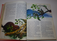 Walt disney's story land 5