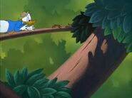 Donald Duck - Out On A Limb 195017