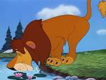 Lambert Lion 16