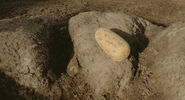 Aladar(egg)