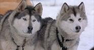 Snow-dogs-disneyscreencaps.com-4897