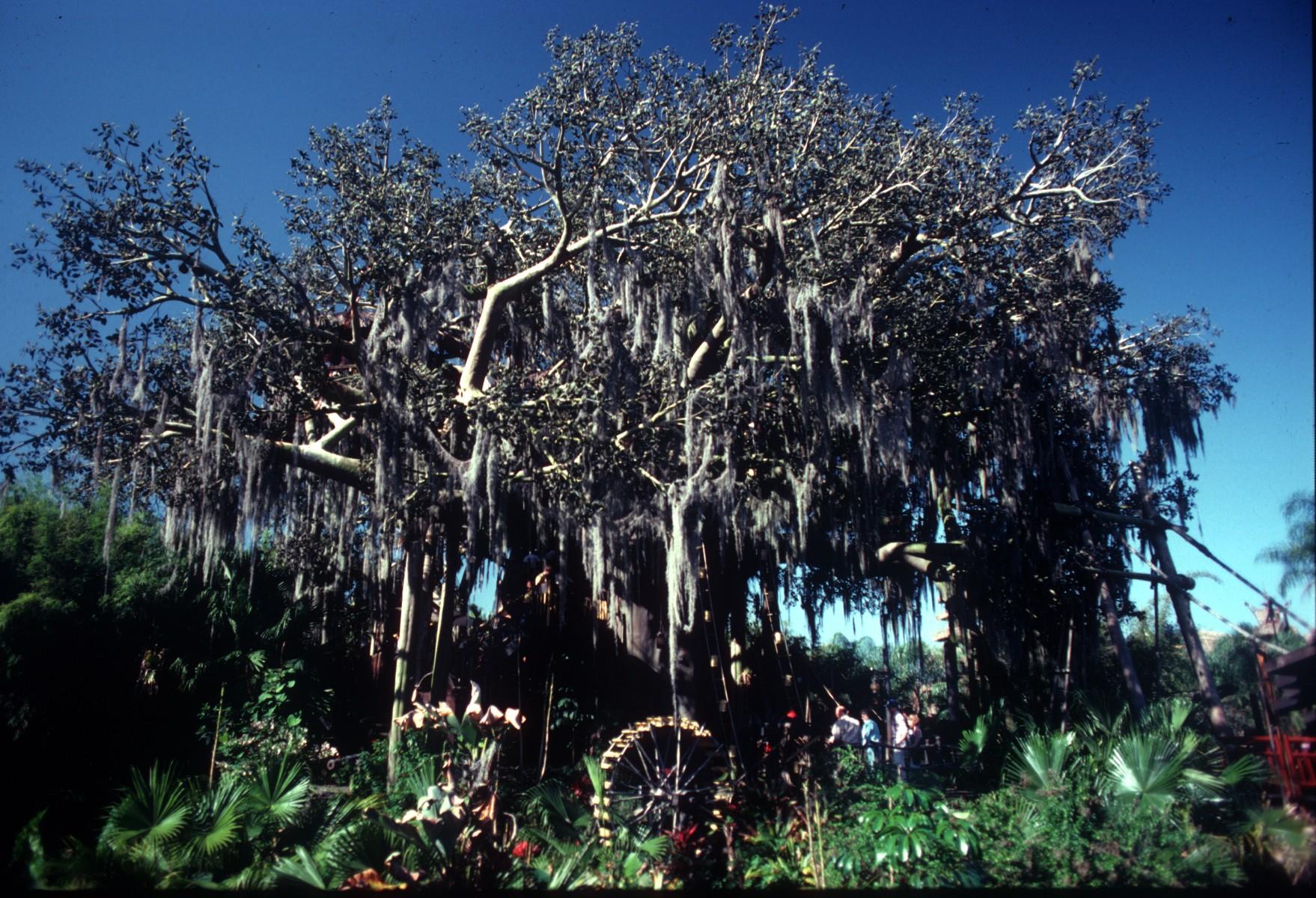 File:Former Treehouse of Disneyland.jpg