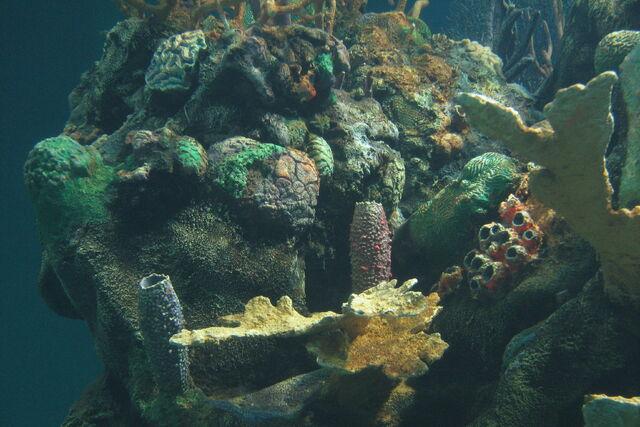 File:Coral reef at Epcot.jpg