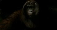 The Jungle Book 2016 (film) 12