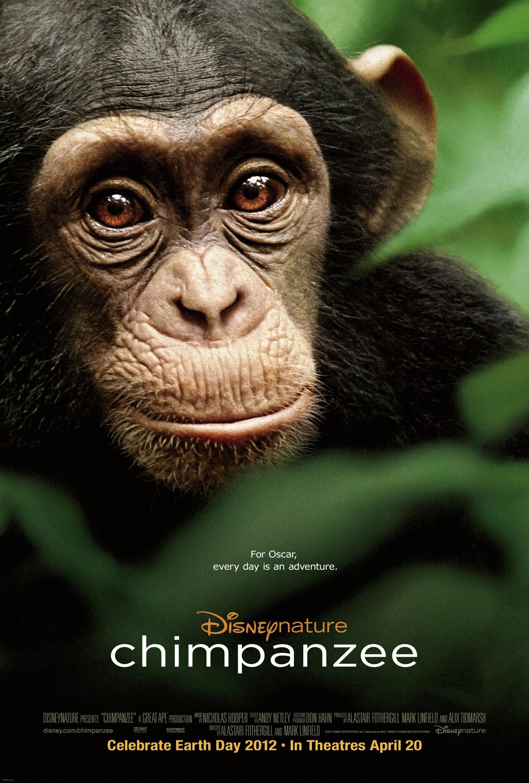 File:Chimpanzee poster.jpg