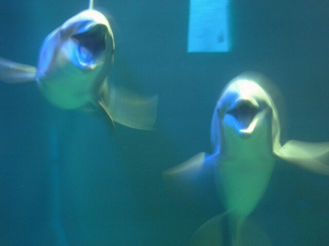 File:The Seas with Nemo & Friends 045 45.JPG