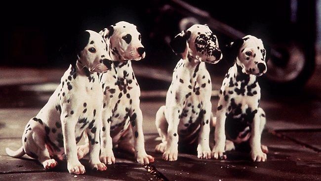Image Dalmatian Puppies 1996 Disney Wiki