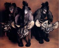 TLK musical hyenas