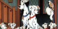 Dalmatian Puppies/Gallery