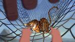 Tarzan-disneyscreencaps.com-561