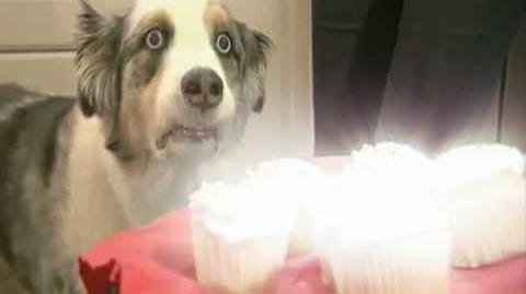 Dramatic Cupcake Dog - Revelation