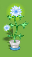 Dizzywood potted glowflower