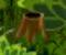 Kaliptus Stump