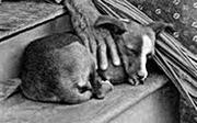 Hawaiian dog, 19th century