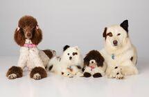 Stan's Dog Family