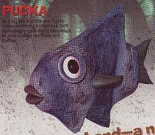 Pucka.png