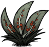 Berry Bush2