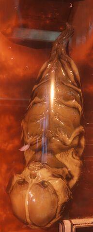 File:Fetus2016-2.jpg