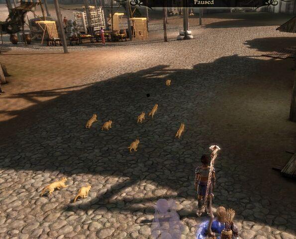 File:Cat-herd.jpg