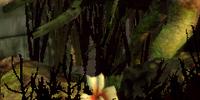 Wilds Flower