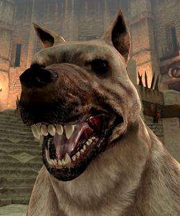 Dog2DAII