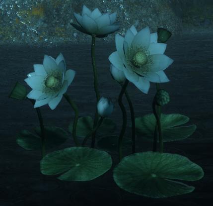 File:Dawn Lotus.png