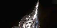 Venatori Helmet