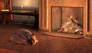Sleeping dog (Dragon Age II)