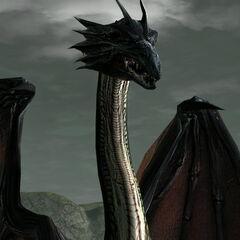 A mature dragon.