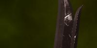 Wide-Blade Sword Schematic