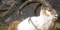 Ram (creature)