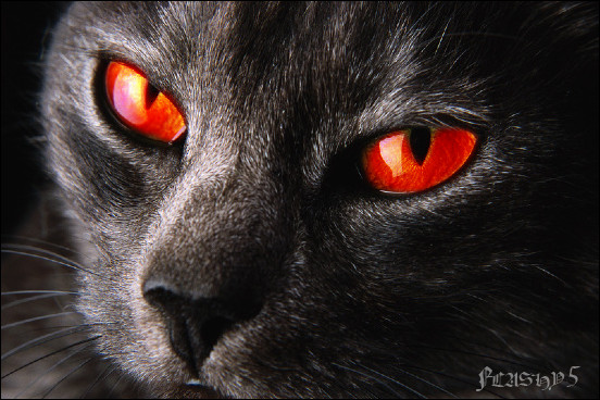 File:Evil red eyed black cat by Flashy5.jpg
