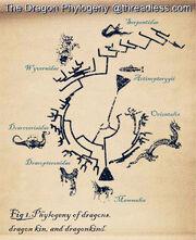 Dragon Phylogeny