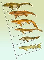 Fishapod evolution